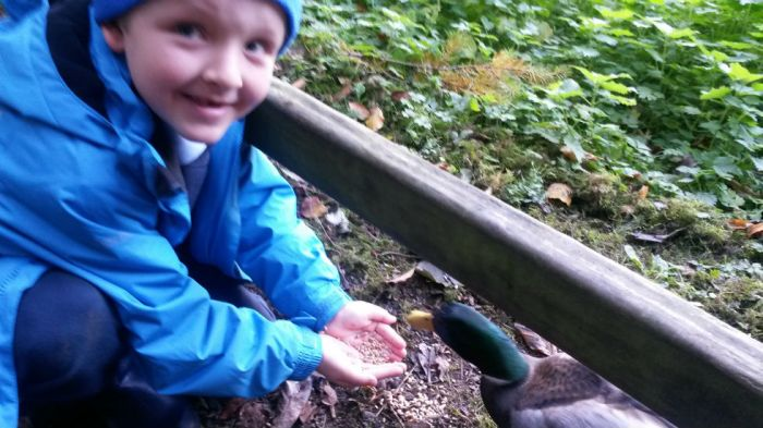 Hand feeding the ducks.